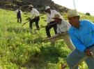'Söke'de çiftçi alternatif ürünlere yöneldi'