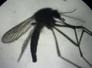 'Zika' sinir sistemine de zarar veriyor