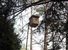 Ormanlara binlerce kuş yuvası asıldı