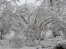 """""""Mart karı"""" fındık üreticilerini endişelendirdi"""