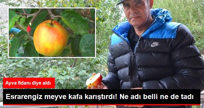 esrarengiz-meyve-kafa-karistirdi-ne-adi-belli-ne_x_8873391_8344_z11