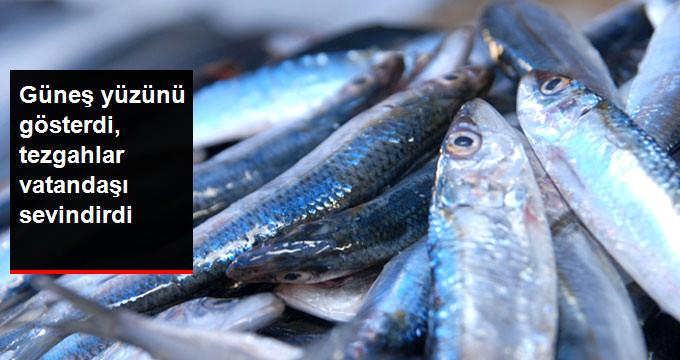 Çanakkale'de Havalar Düzeldi Balıkçının Yüzü Güldü