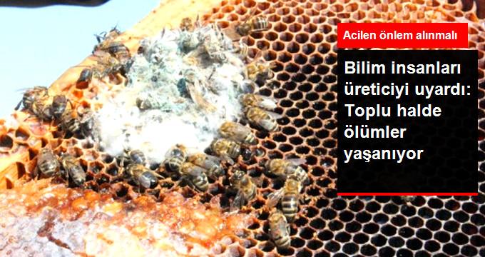 Türkiye'de Yüksek Miktarda Arı Ölümleri Yaşanıyor