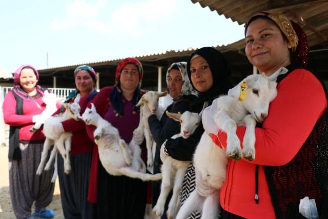 45 Kadın 'Uygulamalı Çobanlık Eğitimi' Alıyor