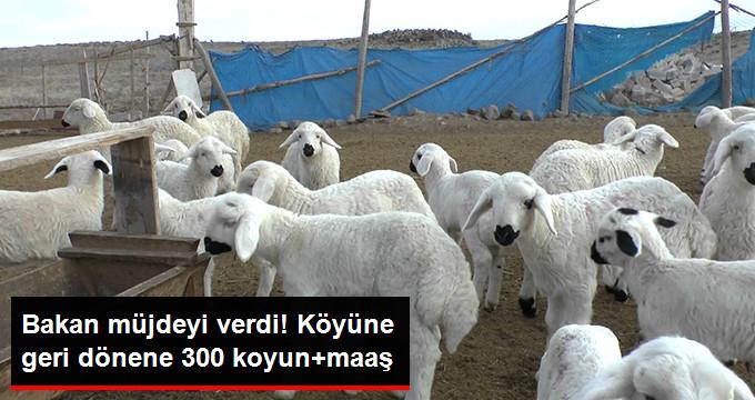 Köyüne Dönen Çiftçiye 300 Koyun ve Maaş Verilecek