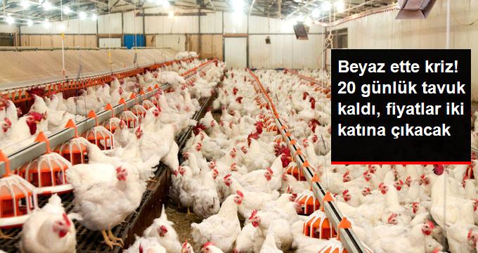 20 Günlük Tavuk Kaldı Fiyatlar İki Katına Çıkacak