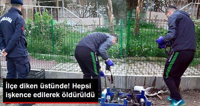 İzmir'de 6 Kaz İşkence Edilerek Öldürüldü