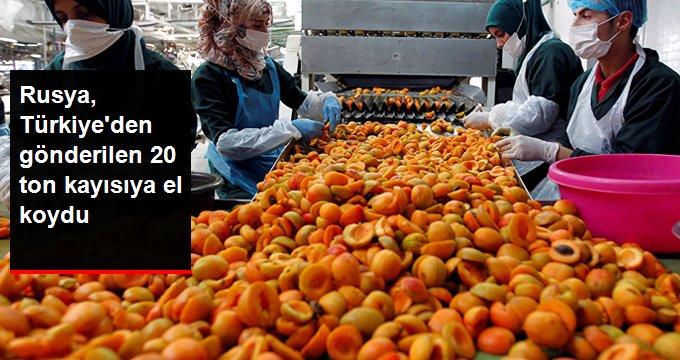 Rusya, Türkiye'den gönderilen 20 ton kayısıyı tezgahlara çıkarmayacak