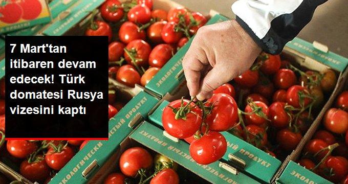 Domates ihracatında Kota 150 Bin Tondan 200 Bin Tona Çıkarıldı